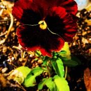 Utah Spring Photography